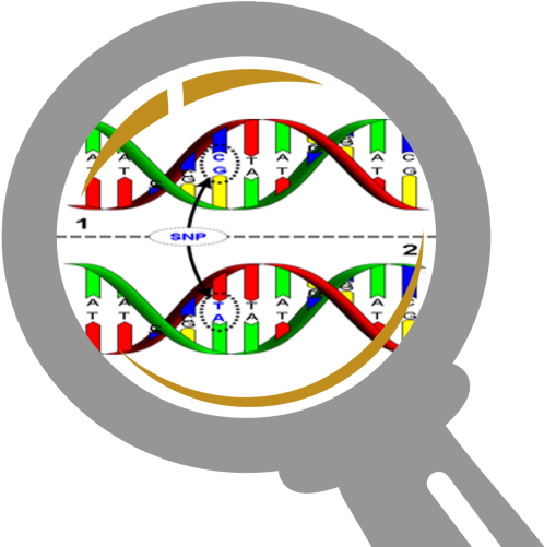 Do you know your individual genetic SNIPS?
